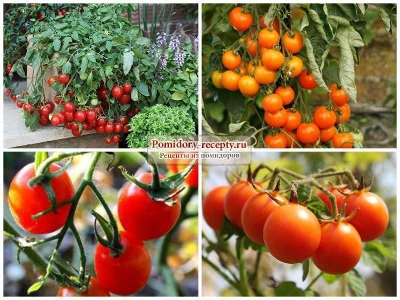 Лучшие помидоры для теплицы из поликарбоната: 10 популярных сортов
