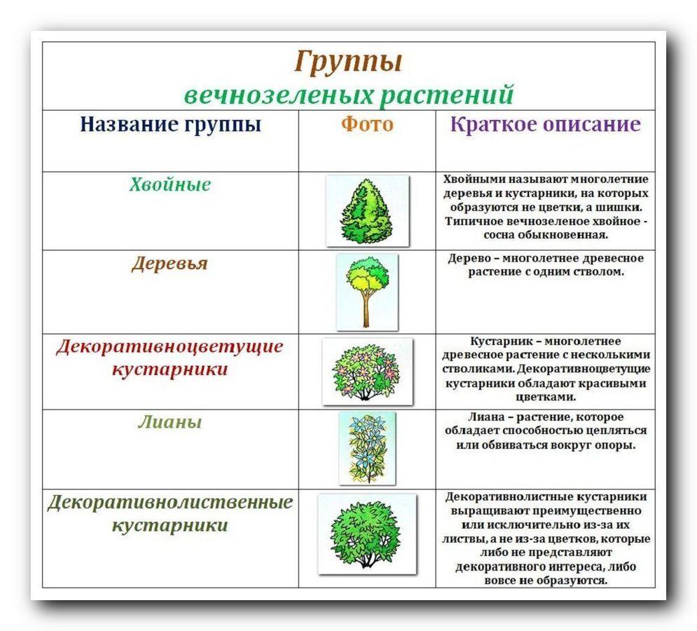 Декоративные деревья и кустарники: названия и фото, виды и уход за ними