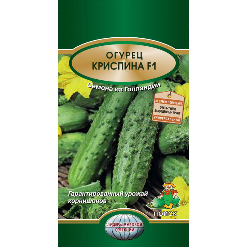 Огурец криспина: описание и характеристика сорта, урожайность с фото