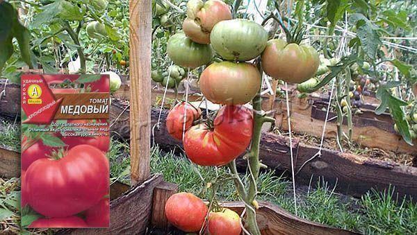 Очень вкусный и удобный томат — пальчики мальвины: описание сорта и особенности ухода