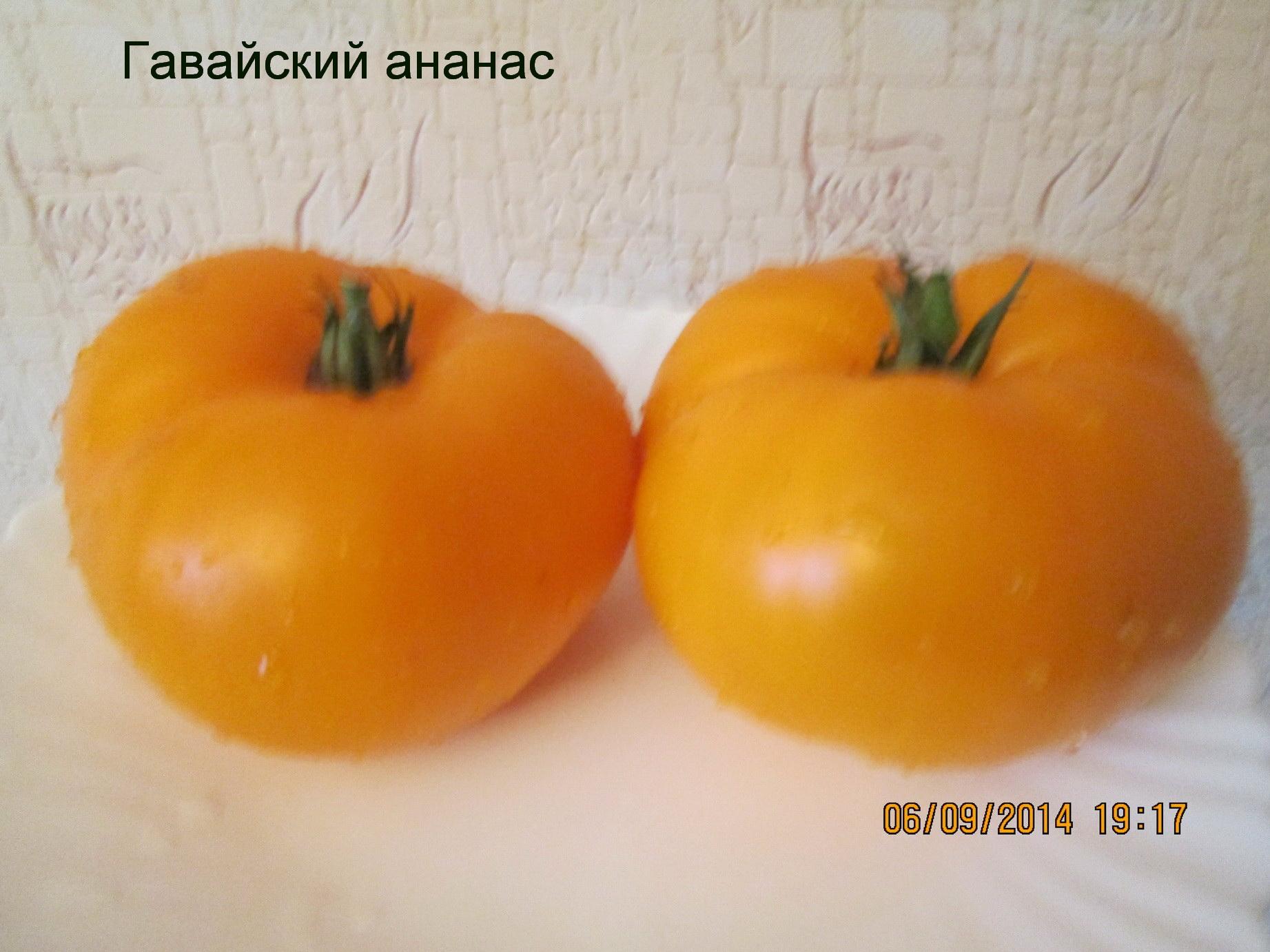 Томат черный ананас: характеристика и описание сорта, отзывы об урожайности помидоров и фото
