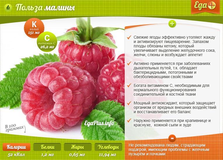 Уникальная малина— основной обзор продукта: полезные свойства, противопоказания и как ее выращивать и хранить