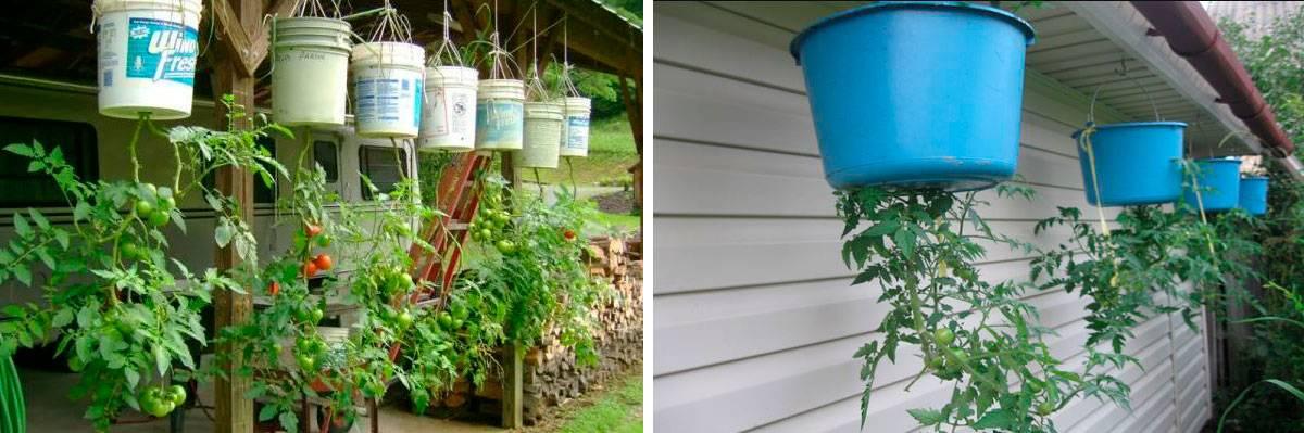 Помидоры вверх ногами: выращивание в перевернутом виде, как поливать, посадить