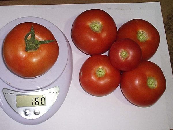 """Томат """"таня"""" f1: описание и характеристики сорта, рекомендации по выращиванию и уходу русский фермер"""