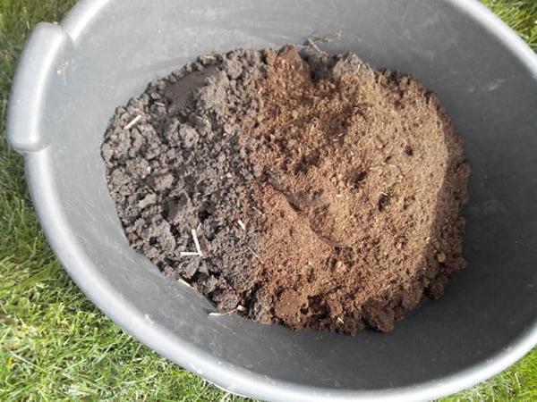 Почва для голубики – какой состав нужен и как сделать своими руками — энкистрой  |  строительство деревянных домов