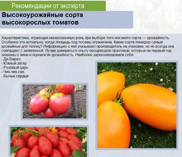 Описание томата Розовые щечки и культивирование растения