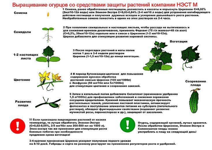 Фунгицид топаз: инструкция по применению для огурцов, винограда, роз, от болезней растений, аналоги, совместимость