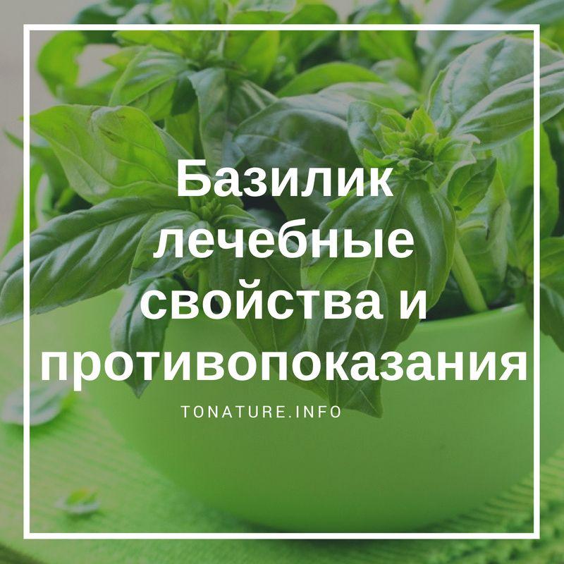 Польза базилика: состав, свойства, виды, для, организма, мужчин, женщин, вред, что это, чем полезен, как есть, витамины