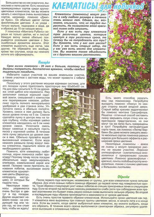 Возможные причины отсутствия цветения вьющегося клематиса