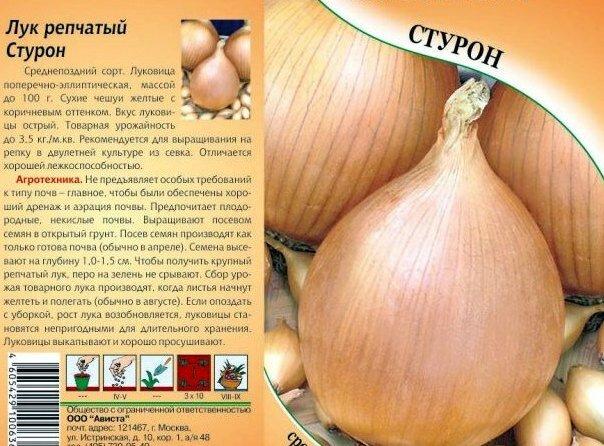 37 лучших сортов для выращивания репчатого лука