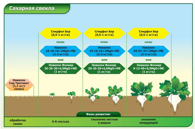 Гербицид для свеклы или как защитить овощ