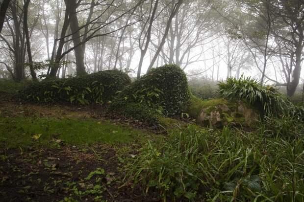 Секретные миры: 7 таинственных британских садов