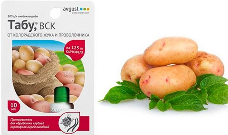 Картофель: обработка клубней перед посадкой от колорадского жука, чем обработать перед проращиванием