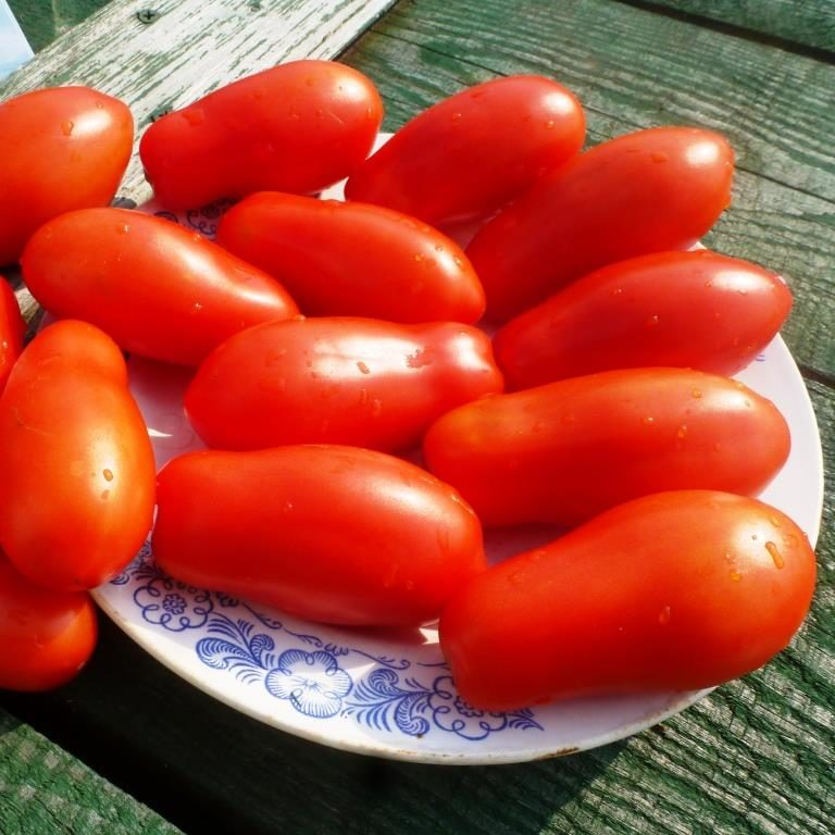 Характеристика и описание томата «дамские пальчики»