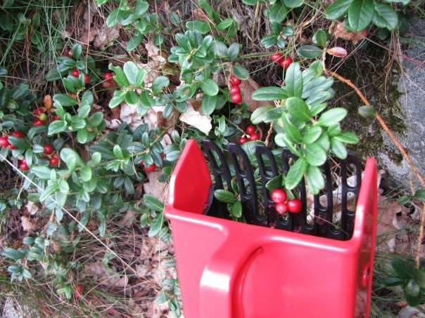 Плодосъёмники (плодосборники) — полезные инструменты для садовода
