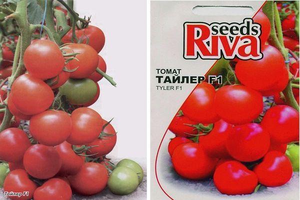 Описание томата Флорида f1, преимущества и агротехника выращивания сорта
