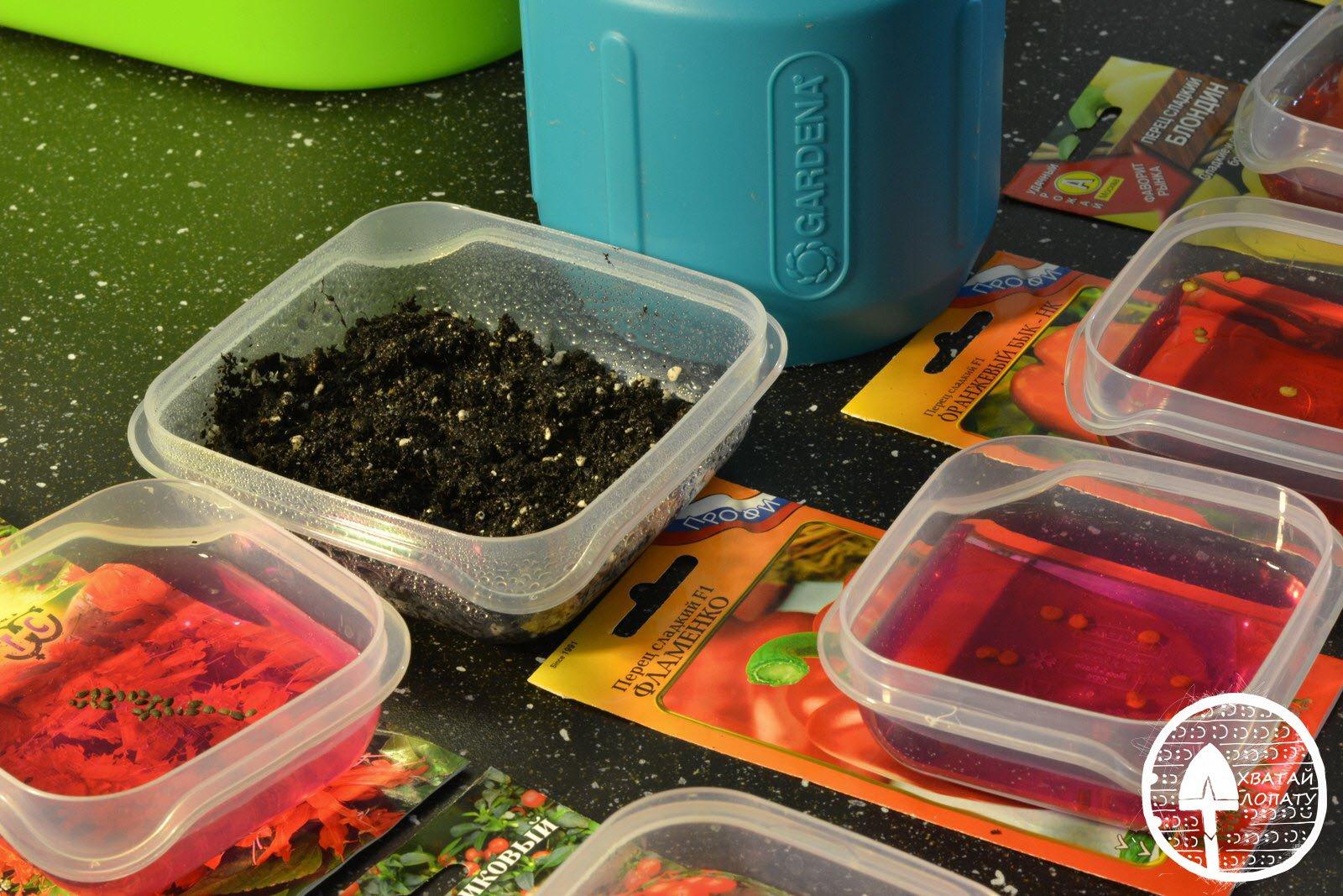 Посадка томатов на рассаду: как сеять помидоры правильно, все об обработке, подготовке и посеве семян в домашних условиях, а также ответ через сколько дней всходят