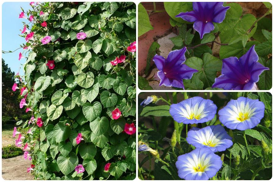 Душица: выращивание из семян, посадка и уход на огороде в открытом грунте или в домашних условиях на подоконнике на рассаду, выбор места и почвы
