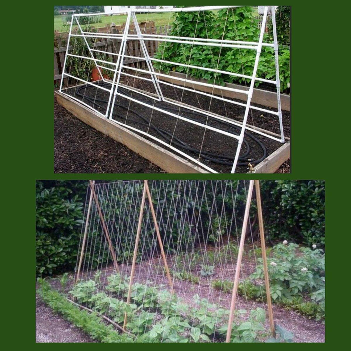 Как своими руками построить шпалеру для помидоров в открытом грунте