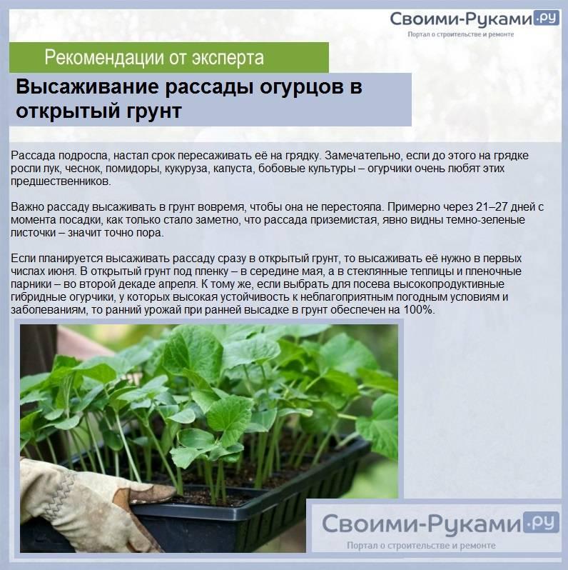 Щавель: выращивание на огороде, свойства