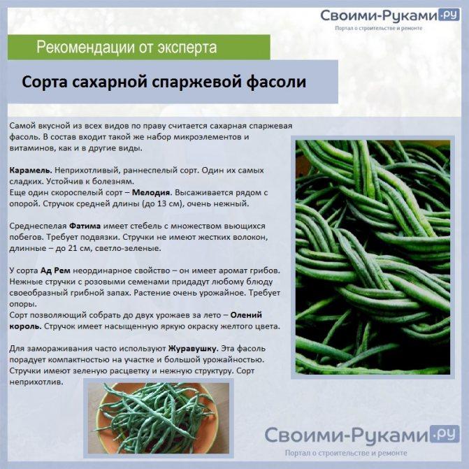 Фасоль: виды и сорта