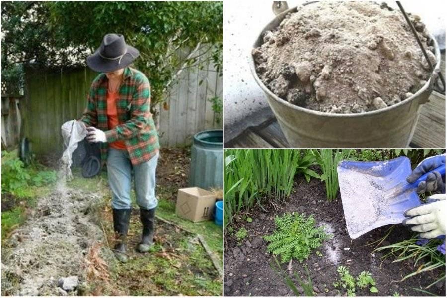 Натуральное удобрение для сада и огорода – костная мука