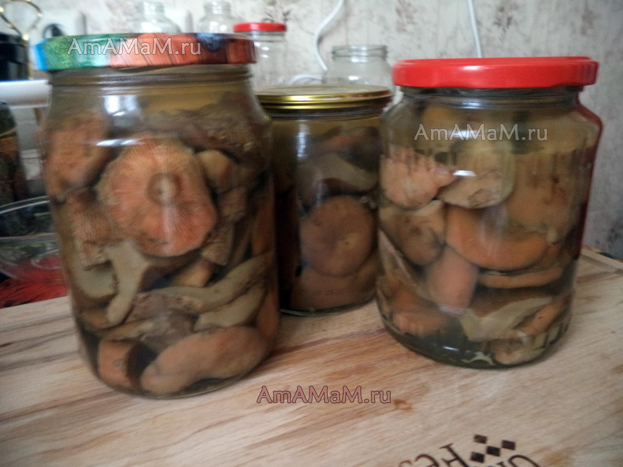 Простые пошаговые рецепты засолки рыжиков в домашних условиях на зиму в банках - всё про сады