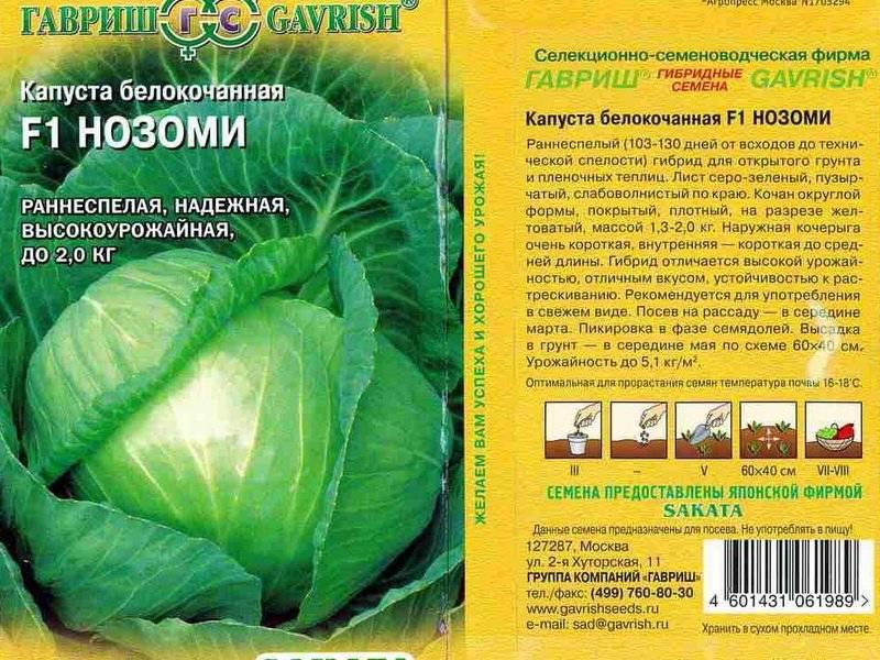 Среднепоздний сорт капусты подарок