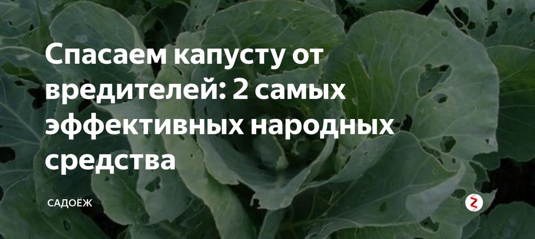 Зола и сода в помощь садоводу. как спасти посадки от вредителей? | дача | аиф красноярск