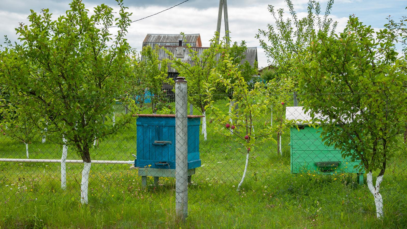 Как избавиться от пчел на даче и в доме