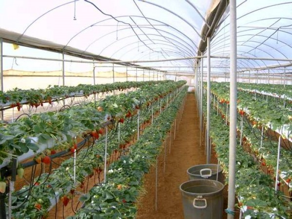 Уход и выращивание