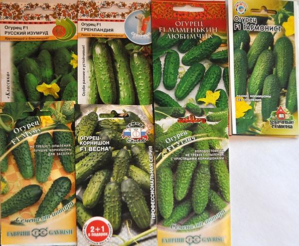 Огурцы гармонист: описание сорта, отзывы, фото, урожайность, посадка и уход