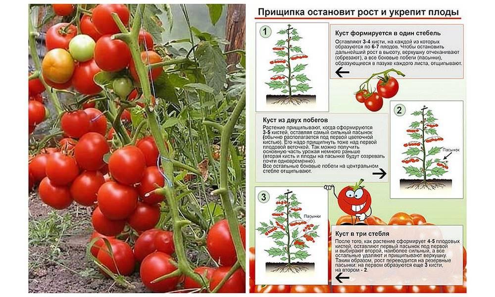 Кудряволистный американский сорт томата «палка»: описание, особенности, фото, характеристика