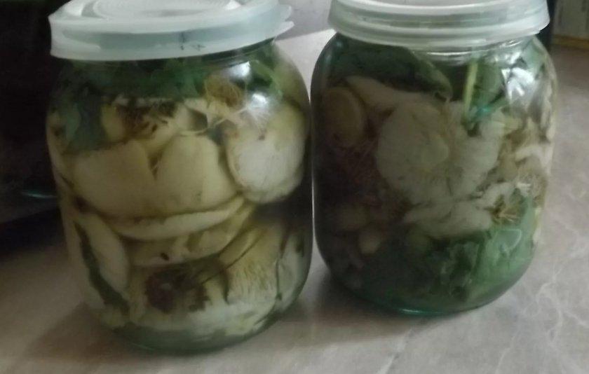 Топ 12 рецептов приготовления соленых сыроежек холодным и горячим способом на зиму - всё про сады