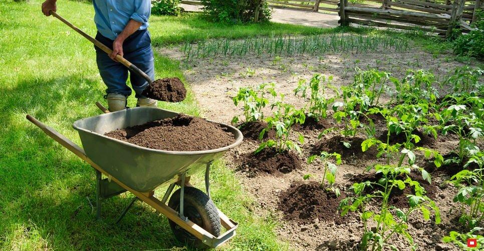 Навоз с опилками: влияние на почву, необходимые пропорции, плюсы и минусы такого удобрения