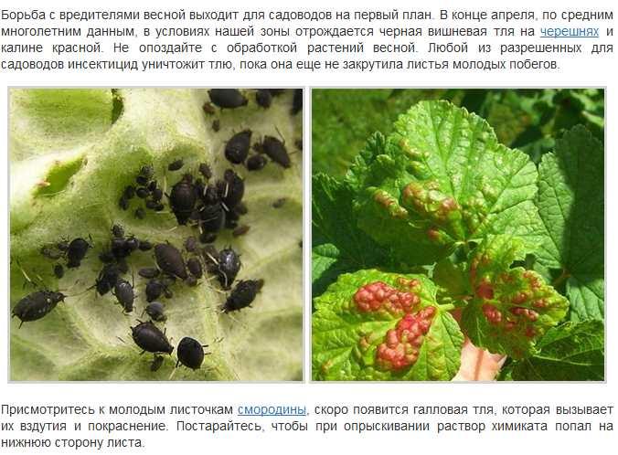 Как бороться с вредителями и болезнями клубники, профилактика | мир садоводства