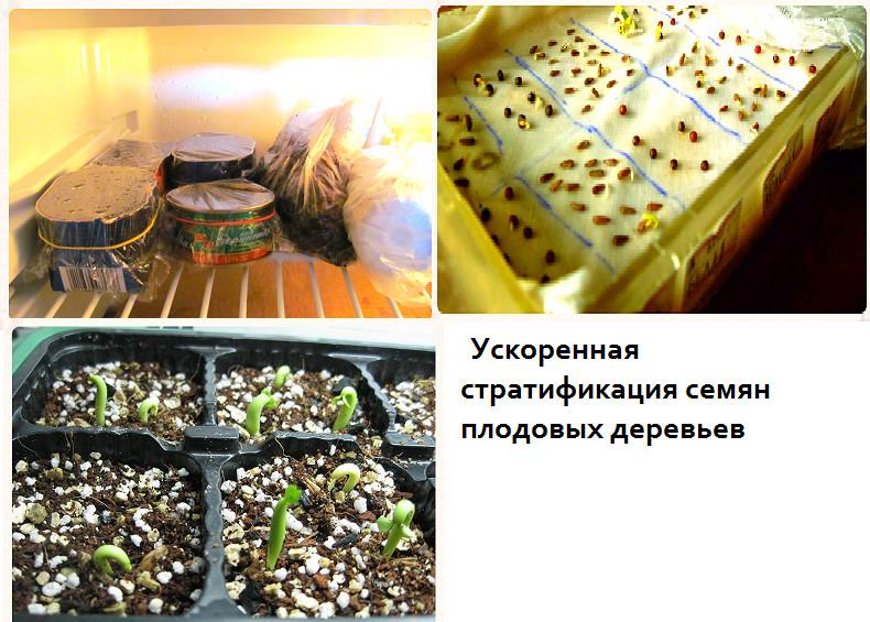 Стратификация семян в домашних условиях: виды, описание и способы проведения