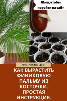 Как посадить и вырастить финик в домашних условиях из косточки