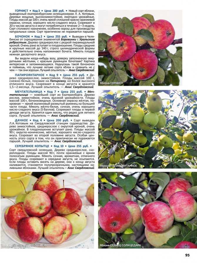 Яблоки сорта «фуджи»: фото, характеристика, достоинства и недостатки. особенности выращивания яблок  «фуджи»: уход
