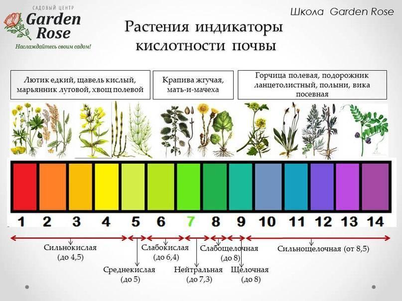 Грунт для цитрусовых: каким должен быть состав