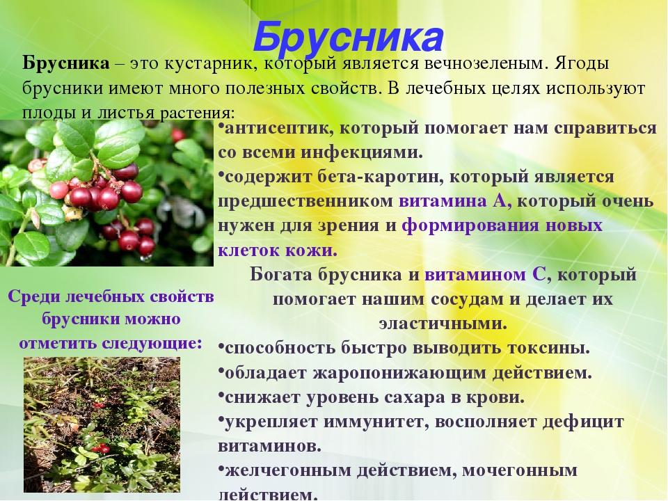 Польза и отзывы о брусничном листе при беременности | компетентно о здоровье на ilive