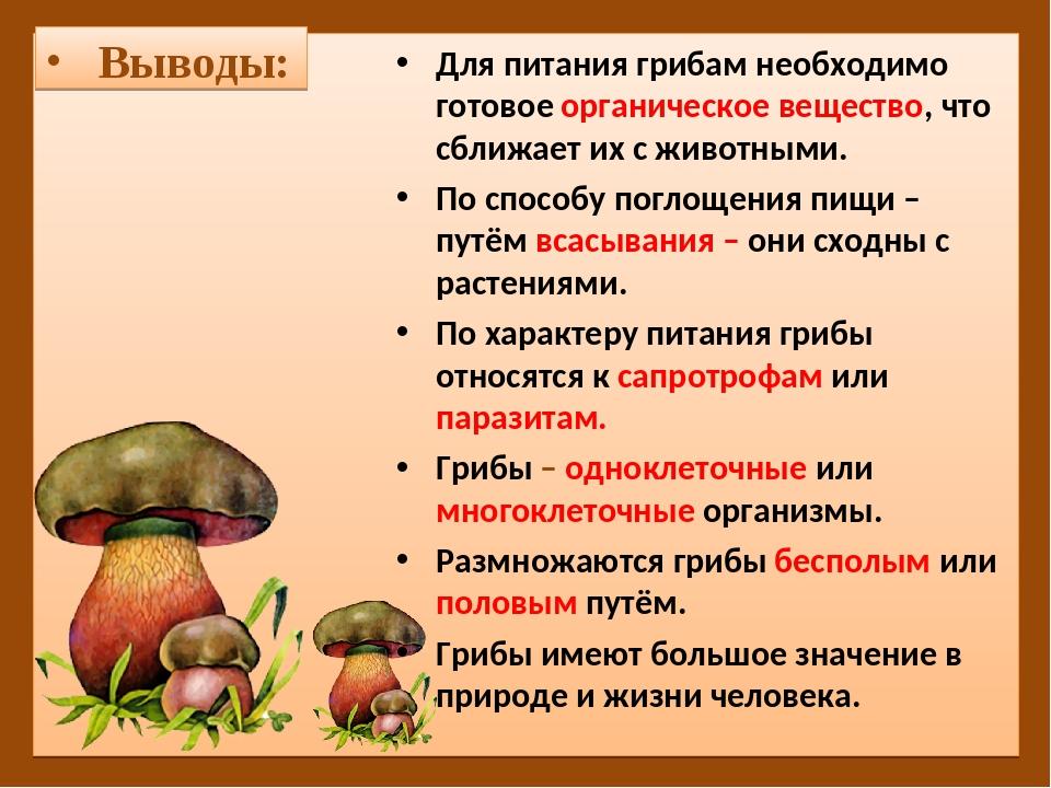 Можно ли мариновать яичный гриб и как это делать правильно (+15 фото)?