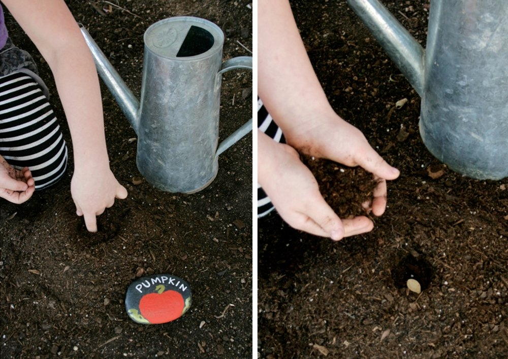 Что надо знать о выращивании красочного каладиума