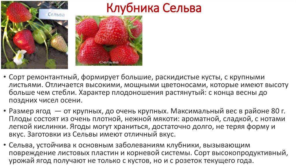 Описание и характеристики сорта клубники флер, тонкости выращивания