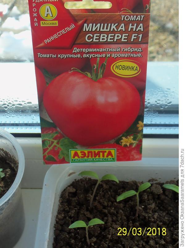 Томат покоритель севера f1: описание, урожайность сорта, отзыв, фото