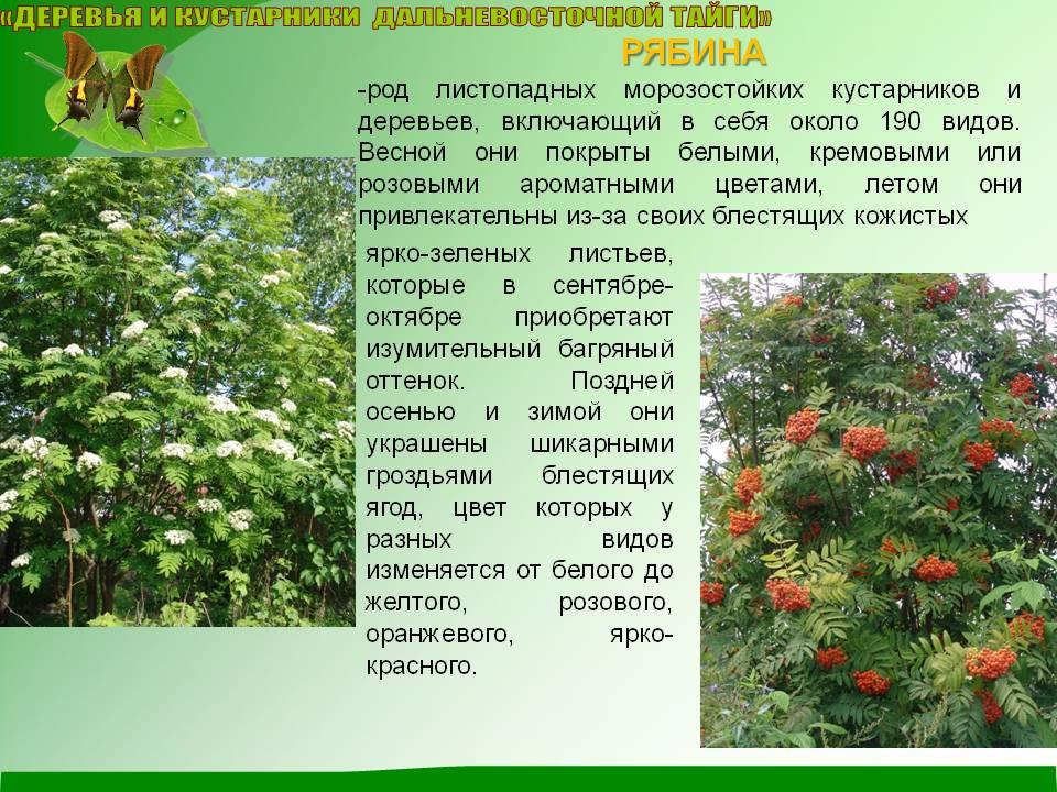 Красивые деревья, которые можно посадить в саду