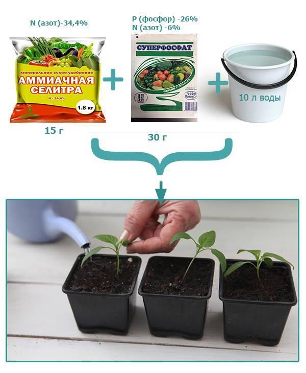 Чем подкормить рассаду перца и помидор чтобы были толстенькие в домашних условиях народными средствами