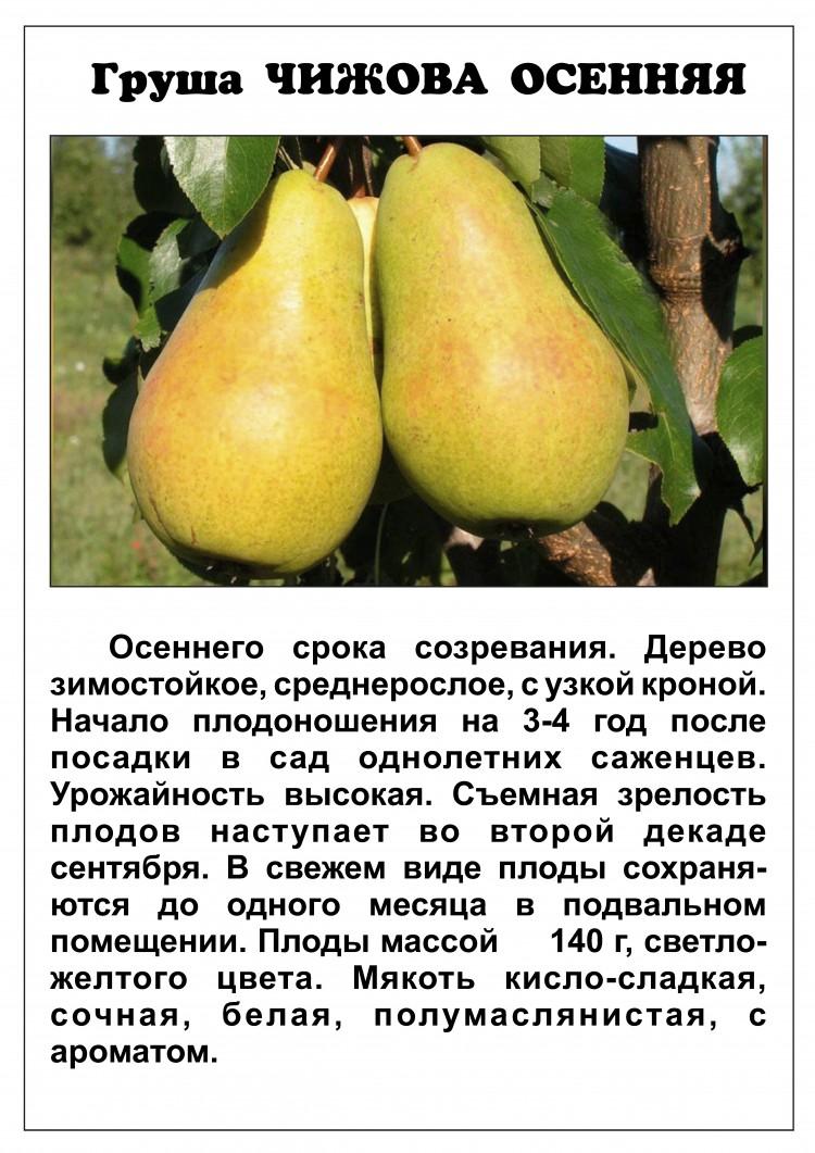 10 лучших сортов груш