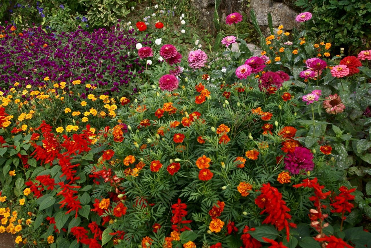 Лабазник выращивание и уход в открытом грунте, посадка и размножение, сорта и сочетание в ландшафтном дизайне, фото