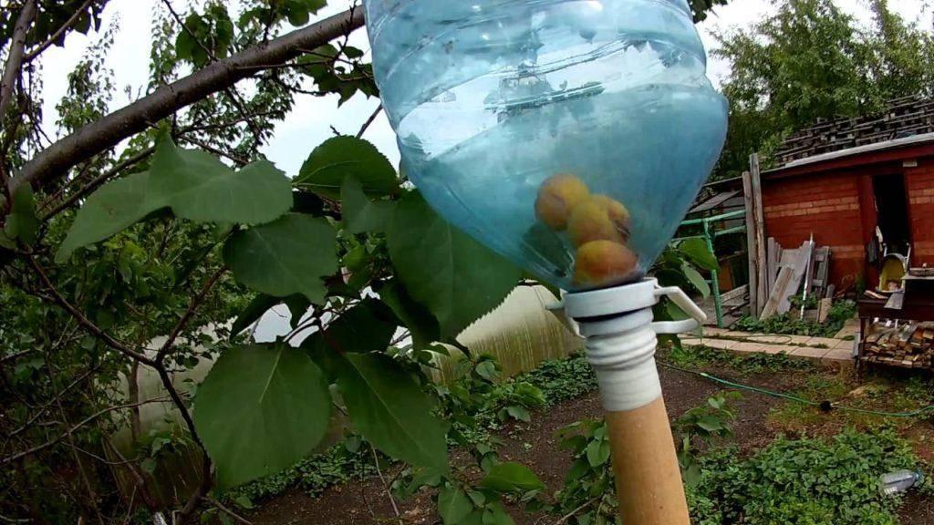 Виды приспособлений и устройств для сбора абрикос с высоких деревьев